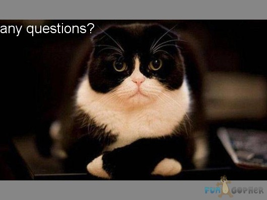 Questions Funny Are There Any Questions Funny